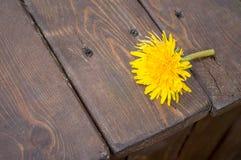 在一张木桌上的黄色蒲公英 库存照片