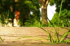 在一张木桌上的绿草 库存图片