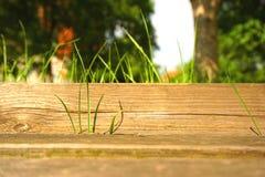 在一张木桌上的绿草 免版税库存图片