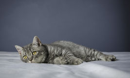 在一张桌上的病的猫与医学 免版税库存照片