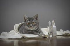 在一张桌上的病的猫与医学 免版税库存图片