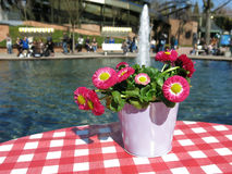 在一张桌上的花在喷泉旁边 免版税库存照片