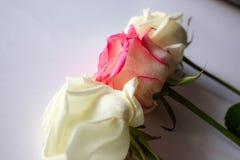 在一张白色桌上的玫瑰 桃红色,白色,3个片断 图库摄影