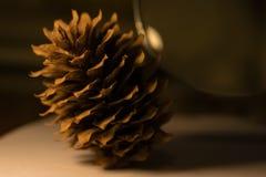 在一张白色纸片的杉木锥体,照亮由台灯 免版税库存图片