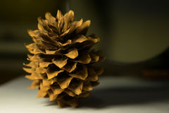 在一张白色纸片的杉木锥体,照亮由台灯 库存图片