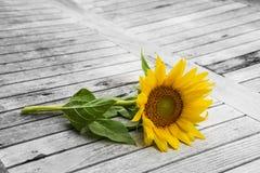 在一张老桌上的向日葵 库存照片