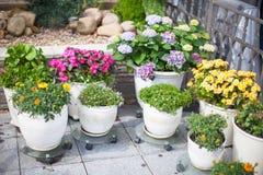 在一张花盆的美丽的colotful花在 免版税库存图片