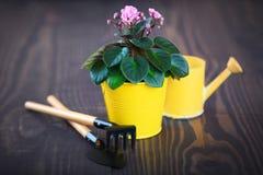 在一张花盆的紫罗兰与铁锹和犁耙 图库摄影