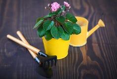 在一张花盆的紫罗兰与铁锹和犁耙 库存图片