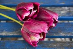 在一张蓝色土气桌上的三紫色郁金香 库存图片