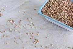 在一张陶瓷桌上的荞麦 免版税图库摄影