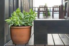 在一张黑褐色桌上的一棵棕色盆的植物 图库摄影