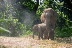 在一成人一个旁边的年轻大象  免版税库存照片