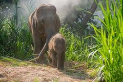 在一成人一个旁边的年轻大象  库存照片