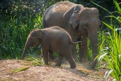 在一成人一个旁边的年轻大象  图库摄影