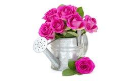 在一把喷壶的桃红色玫瑰 免版税库存照片
