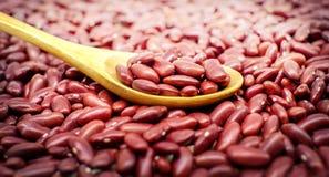 在一把木匙子的干红豆有浅景深的 免版税库存图片