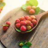 在一把木匙子的开胃野草莓在桌上 在早晨光,一个健康早餐饮食概念的莓果 库存图片