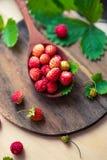 在一把木匙子的开胃野草莓在桌上 在早晨光,一个健康早餐饮食概念的莓果 免版税库存图片