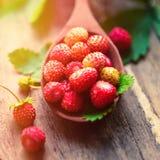 在一把木匙子的开胃野草莓在桌上 在早晨光,一个健康早餐饮食概念的莓果 免版税图库摄影