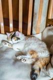 在一把木椅子的一只猫 免版税库存照片