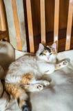 在一把木椅子的一只猫 免版税图库摄影