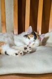 在一把木椅子的一只猫 图库摄影