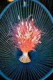 在一把柳条蓝色椅子的五颜六色的婚礼花束 免版税图库摄影