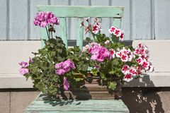 在一把绿色木椅子的花盆 春天装饰集合 免版税库存图片