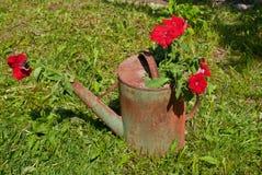 在一把老喷壶的花。 免版税库存图片