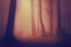 在一有雾的天期间,树喜欢火炬在森林里 免版税库存照片