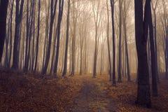 在一有雾的天期间,浪漫典雅的森林 库存图片