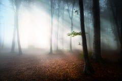 在一有雾的天期间的神秘的森林 免版税库存照片