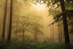 在一有雾的天期间,神秘的森林 免版税库存照片