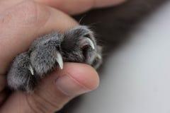 在一本大书后掩藏的猫 我们能看到仅cat& x27; 有长和锋利的爪和颊须的s爪子 免版税库存照片