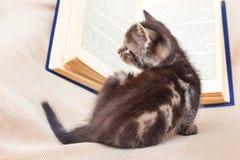 在一本开放书附近的一只小的小猫 阅读书是喜爱o 库存照片