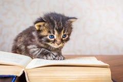 在一本开放书附近的小的镶边小猫 读书教训 读取 库存图片