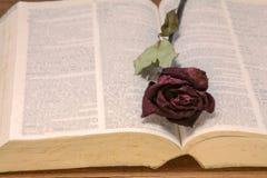 在一本旧书的干红色玫瑰,葡萄酒口气 免版税库存照片