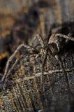 在一本木日志的一只蜘蛛 免版税图库摄影