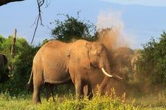 在一朵多灰尘的云彩的非洲大象 肯尼亚,非洲 库存照片