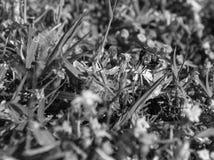 在一朵小野花登陆了一次共同的房子飞行的黑白,宏观照片 库存照片