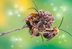 在一朵干燥花的黄蜂 库存照片