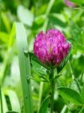 在一朵普通的花的秀丽 免版税图库摄影