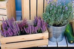 在一朵桶和石南花的淡紫色灌木在一个木箱 免版税库存图片