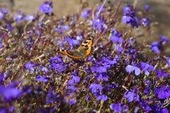 在一朵死的花的一只孤立蝴蝶 免版税图库摄影