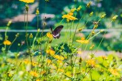 在一朵热带花的蝴蝶在蝴蝶公园 图库摄影