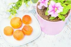 在一朵白色板材和喇叭花的杏子在花盆 库存图片