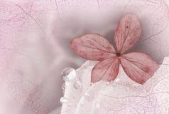 在一朵白色玫瑰与露滴和空泡的八仙花属开花 图库摄影