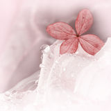 在一朵白色玫瑰的八仙花属开花与露滴 库存图片