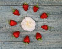 在一朵白色玫瑰附近被排行的新鲜的草莓 库存图片